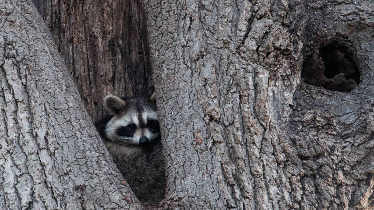 La vie des bêtes, face cachée de New York