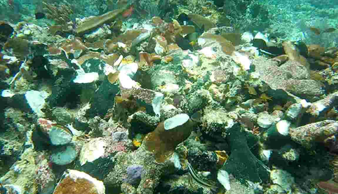 Indonésie: un bateau de croisière percute des récifs coralliens uniques