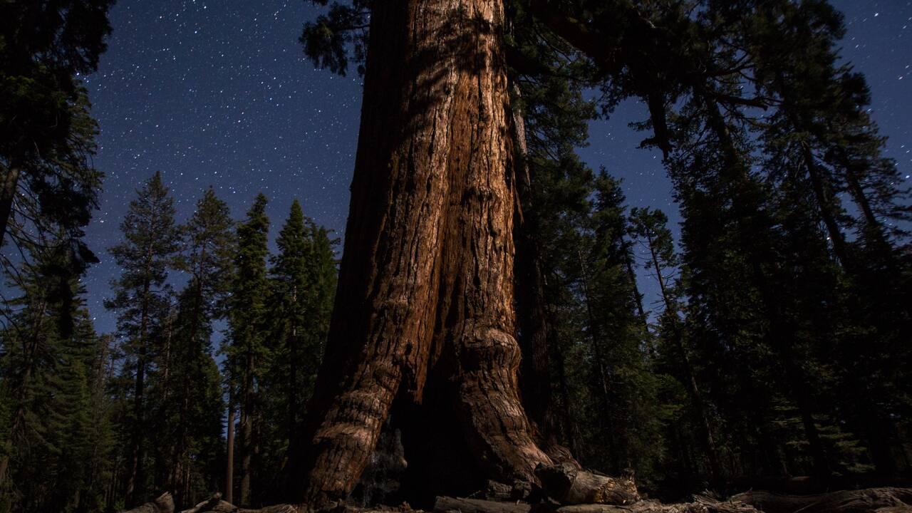 Les géants de Yosemite, à la belle étoile