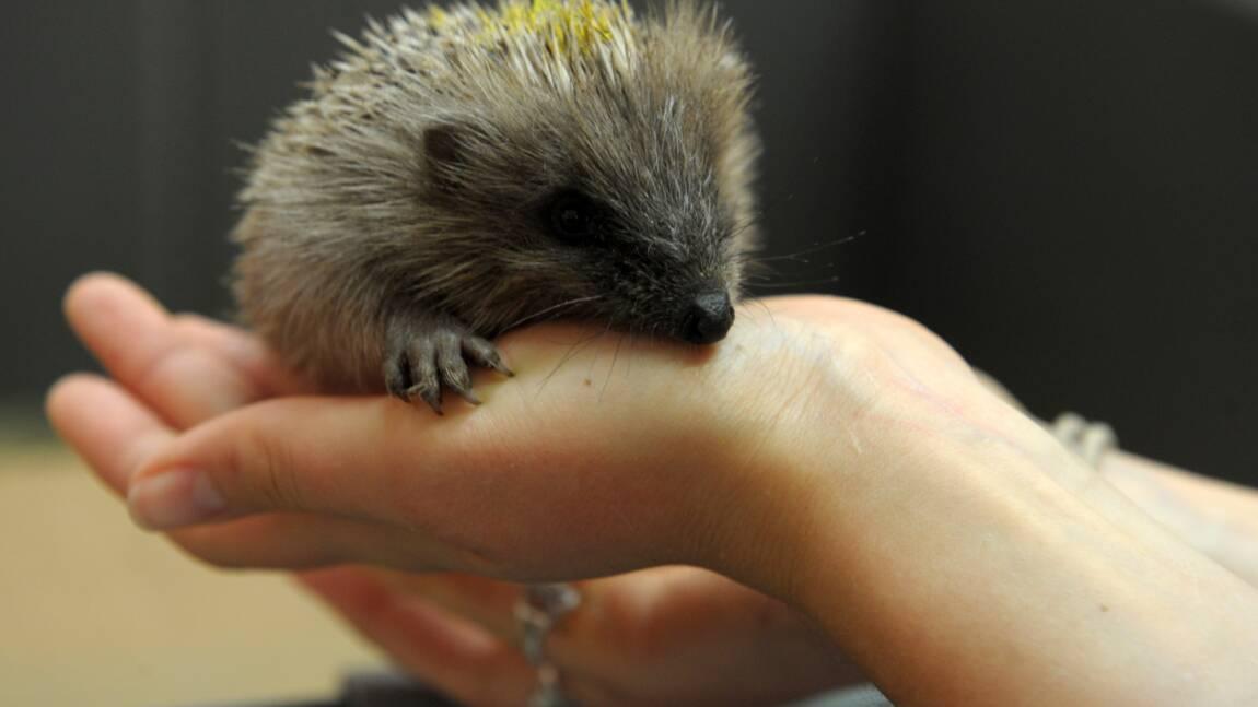 Charente-Maritime: le département reprend la collecte d'animaux sauvages en détresse