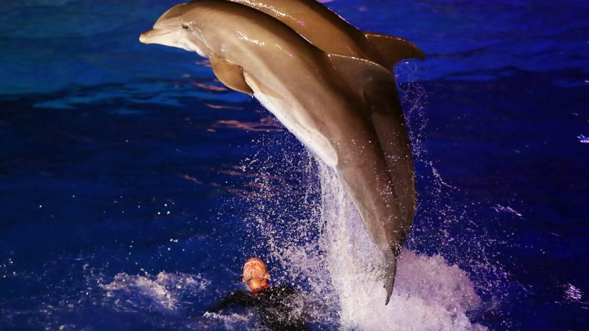 Manifestation à Antibes contre les delphinariums