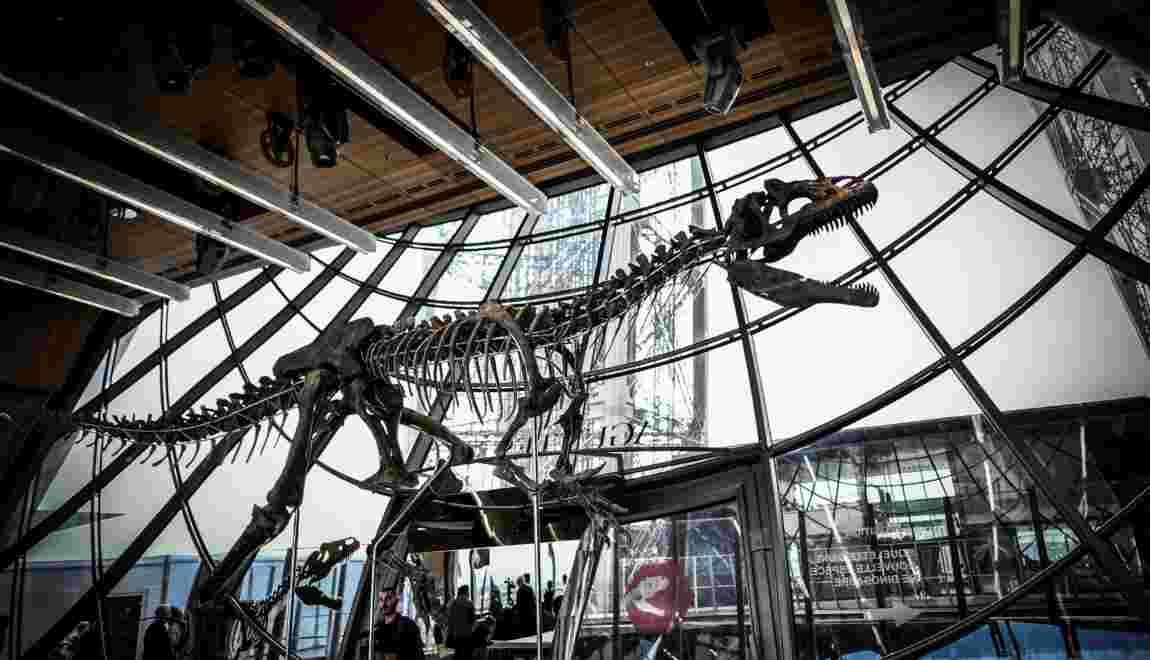 Le squelette d'un dinosaure carnivore vendu 2 millions d'euros à Paris