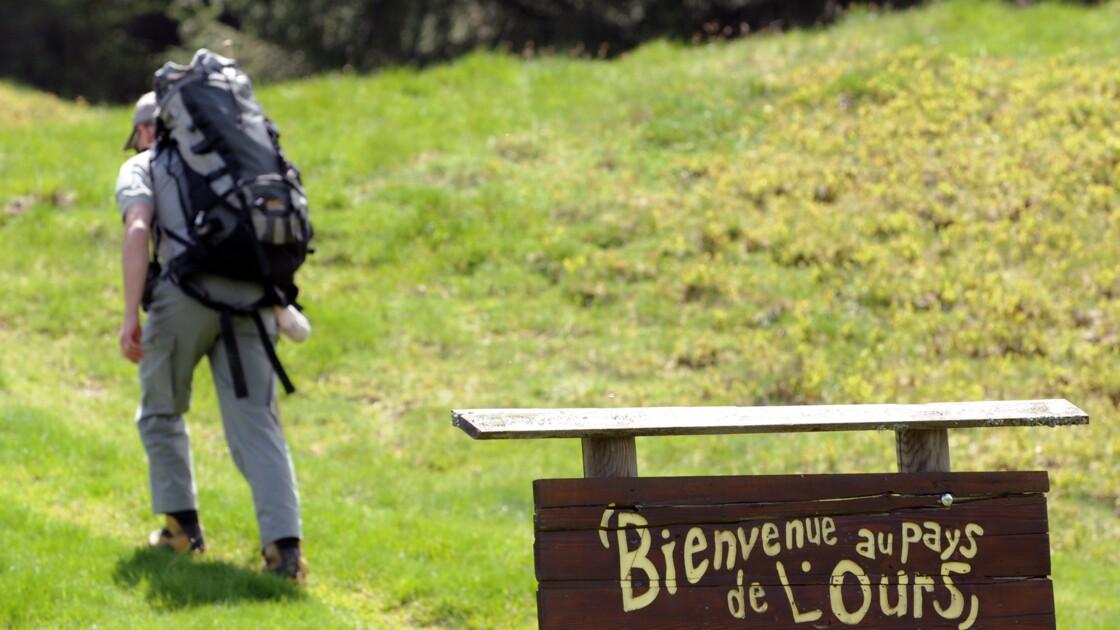 Au moins 39 ours détectés dans les Pyrénées