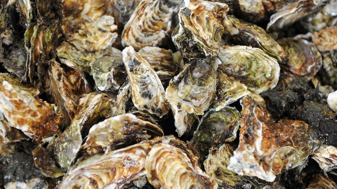 Etang de Thau: un tiers des huîtres et 100% des moules tuées par la malaïgue