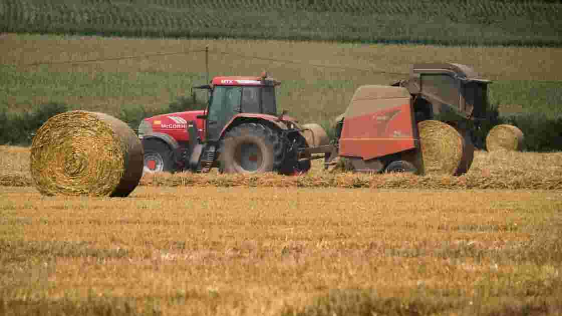 Le génome complet du blé tendre séquencé pour la première fois