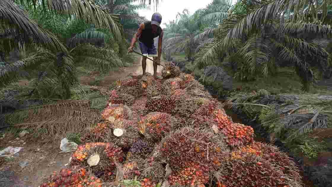 HSBC finance la destruction de forêt tropicale, selon Greenpeace
