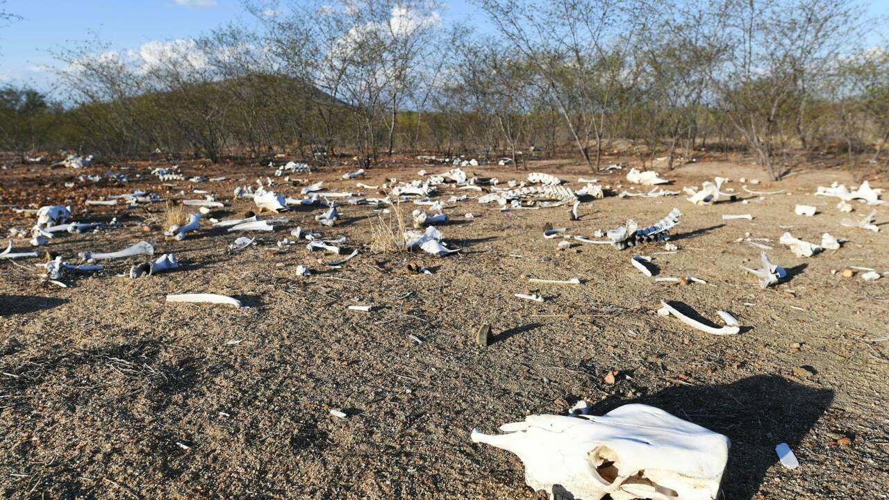VIDÉO - Dans le nord-est du Brésil, la sécheresse est sans précédent