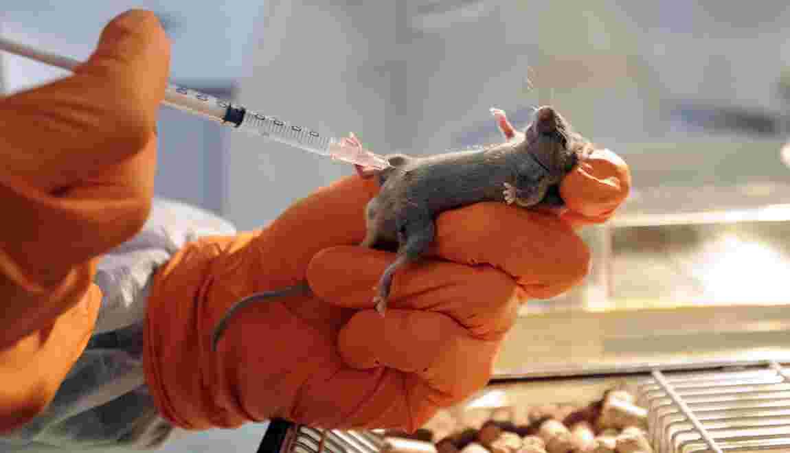 Nouvelle avancée dans l'édition génétique pour traiter des maladies incurables