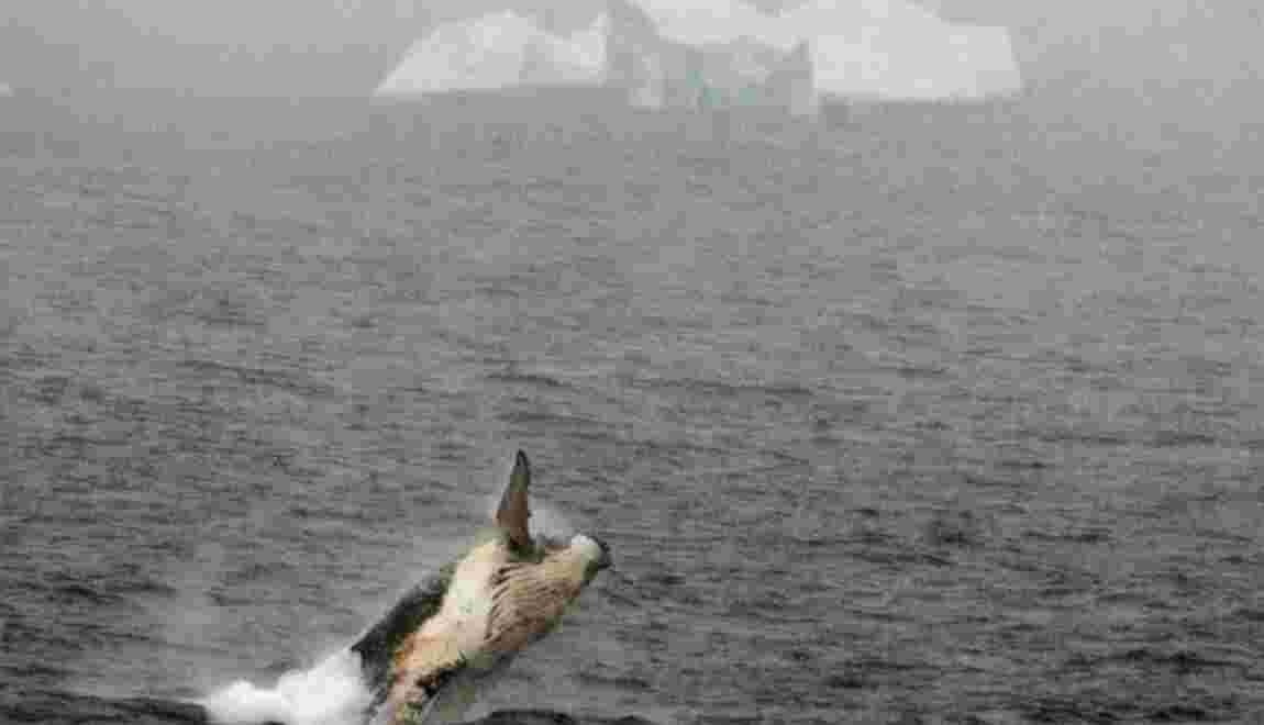 Départ de navires baleiniers japonais pour l'Antarctique