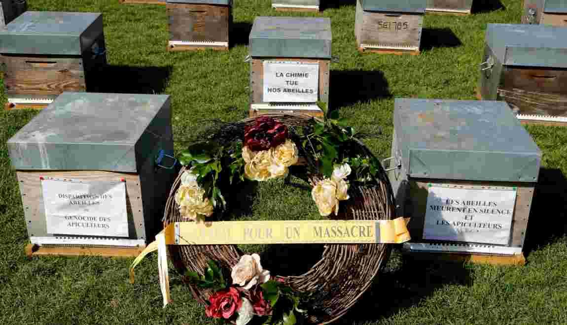Apiculture: le ministère de l'Agriculture va recenser toutes les mortalités d'abeilles