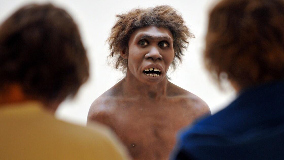 Néandertal: un crâne de 400.000 ans pourrait élucider ses origines