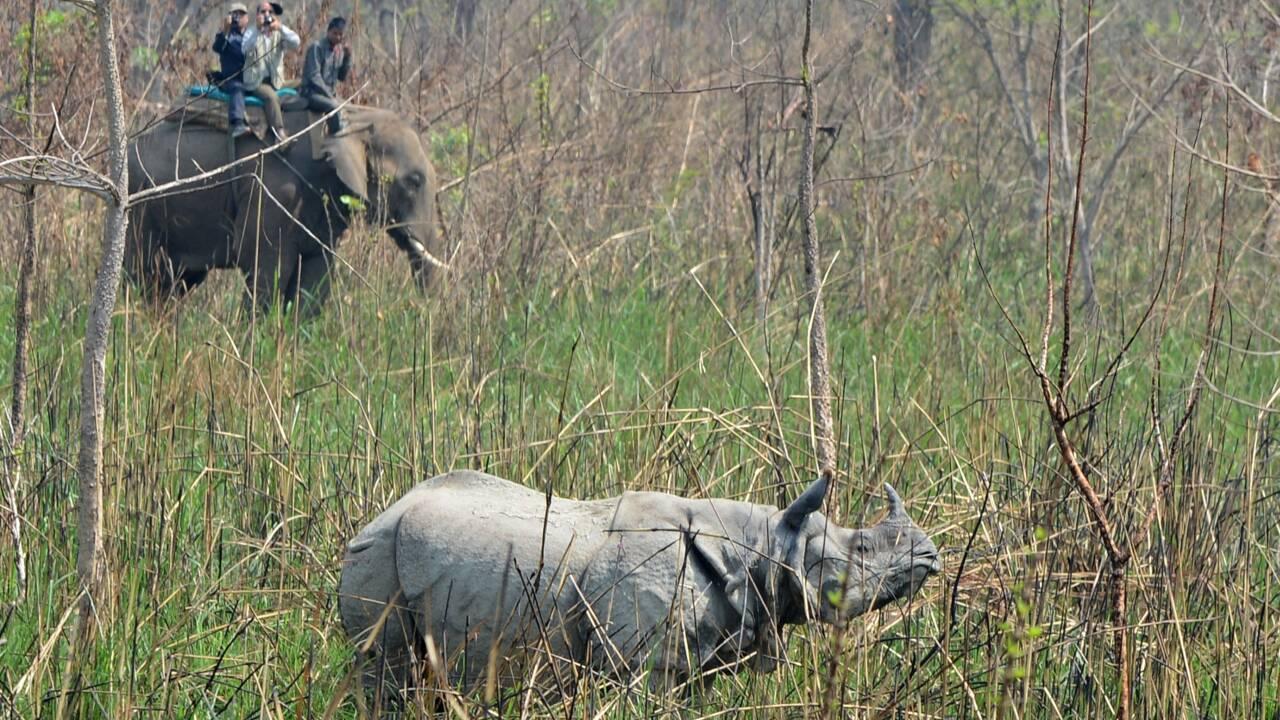 Népal: un rhinocéros tué par des braconnier dans un parc national