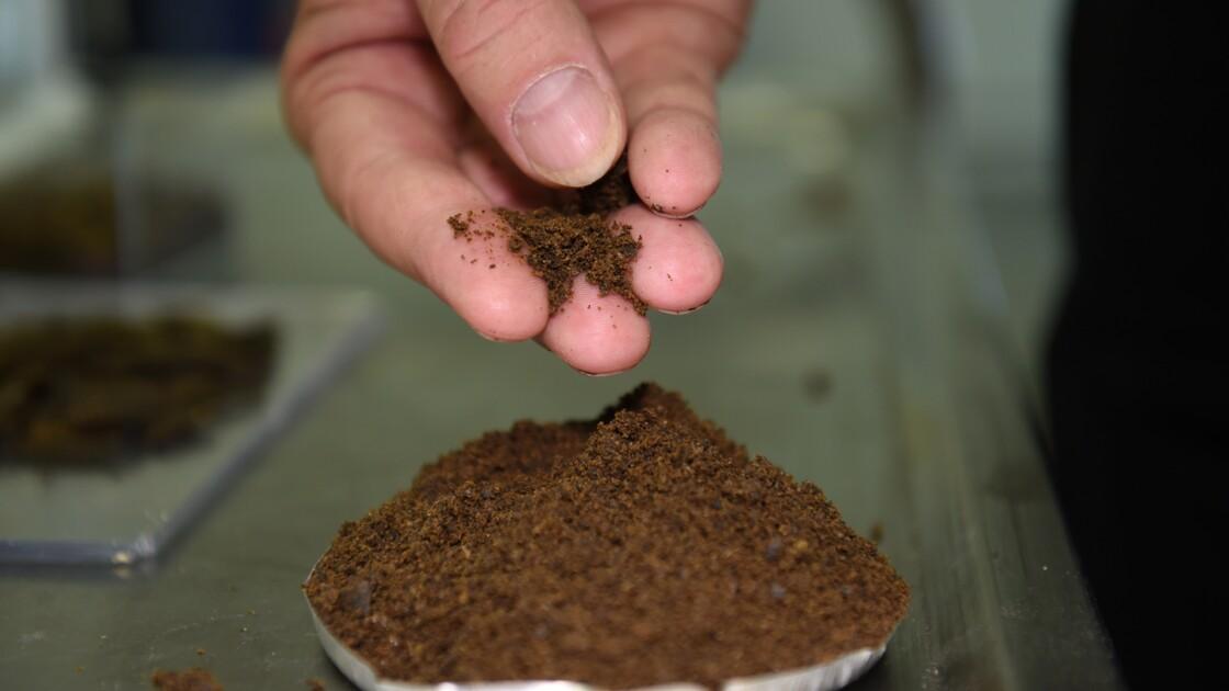 Farines d'insectes pour les animaux: les débuts d'une filière industrielle