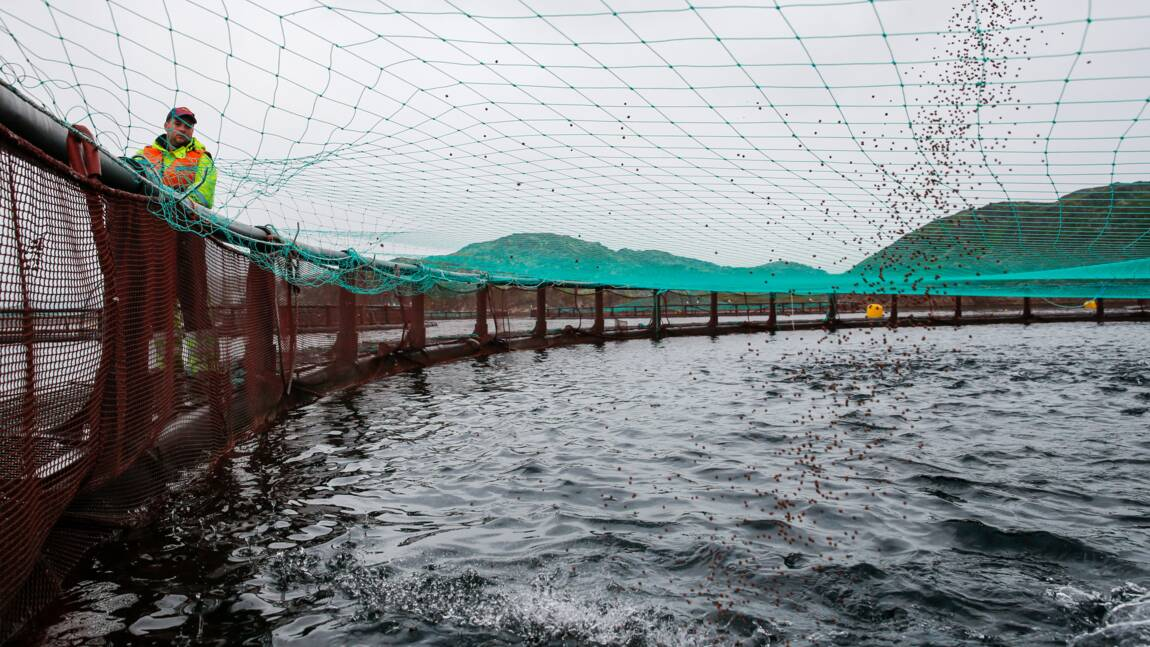 Les océans pourraient accueillir des millions de km2d'aquaculture