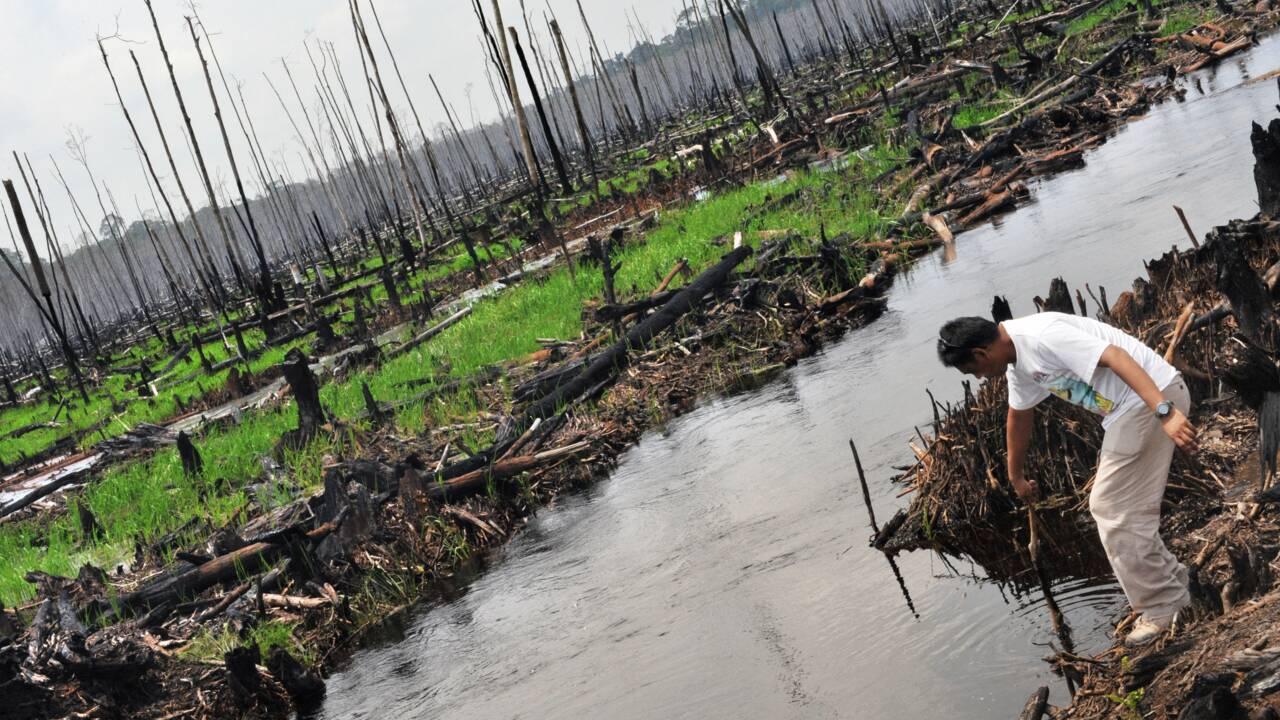La disparition des tourbières tropicales accélère le réchauffement