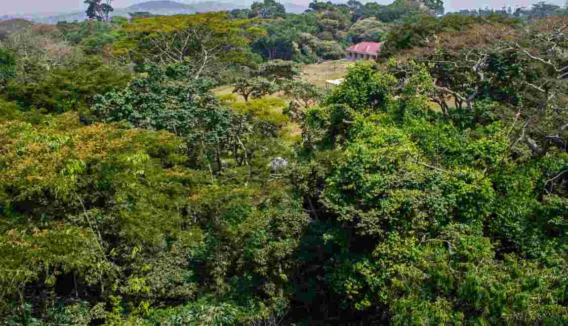 En Afrique, financer la forestation, une stratégie contre le réchauffement?