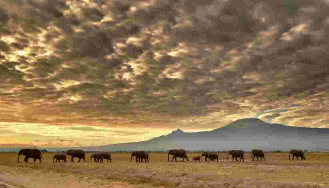Le massacre des éléphants pour leur ivoire s'intensifie