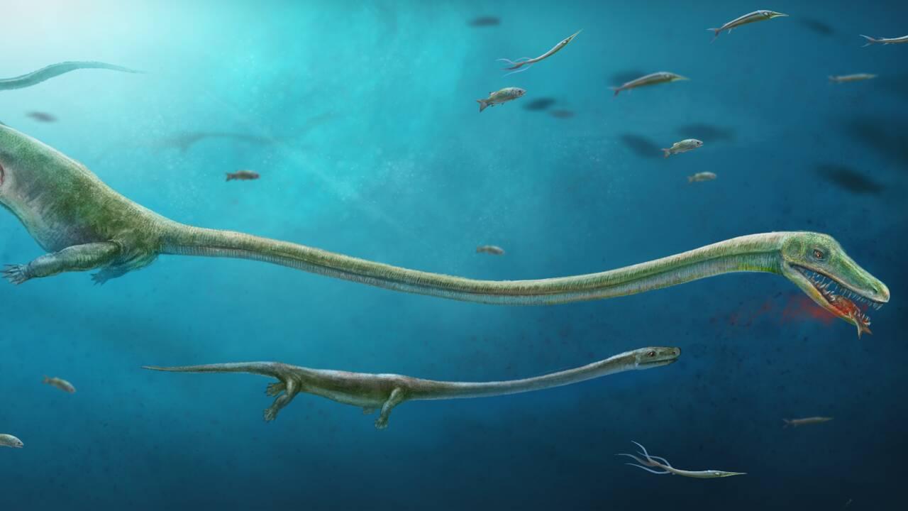 Un embryon fossile qui surprend