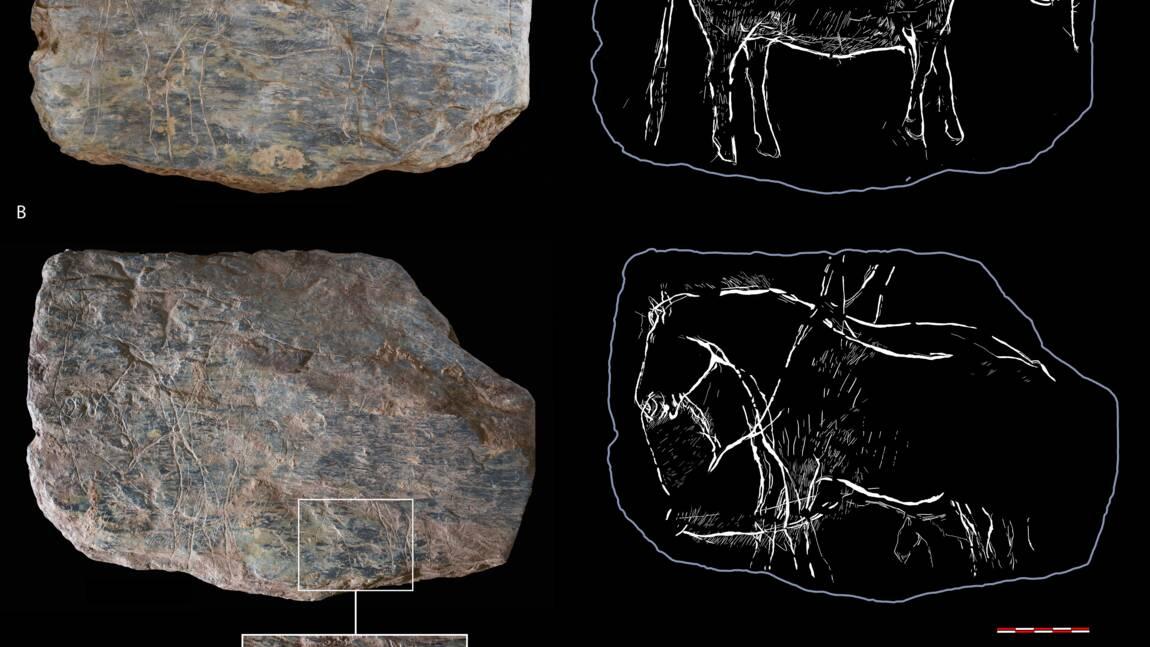 Bretagne : des gravures vieilles de 14 000 ans éclairent la Préhistoire