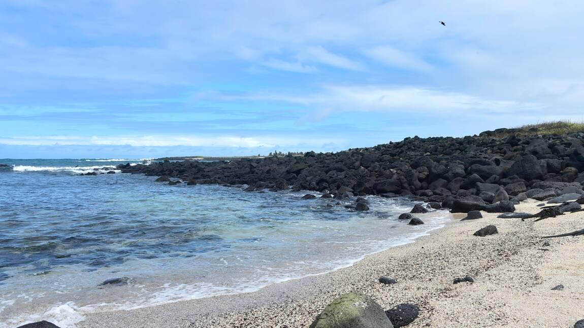 La moitié des vertébrés menacés d'extinction vivent sur des îles