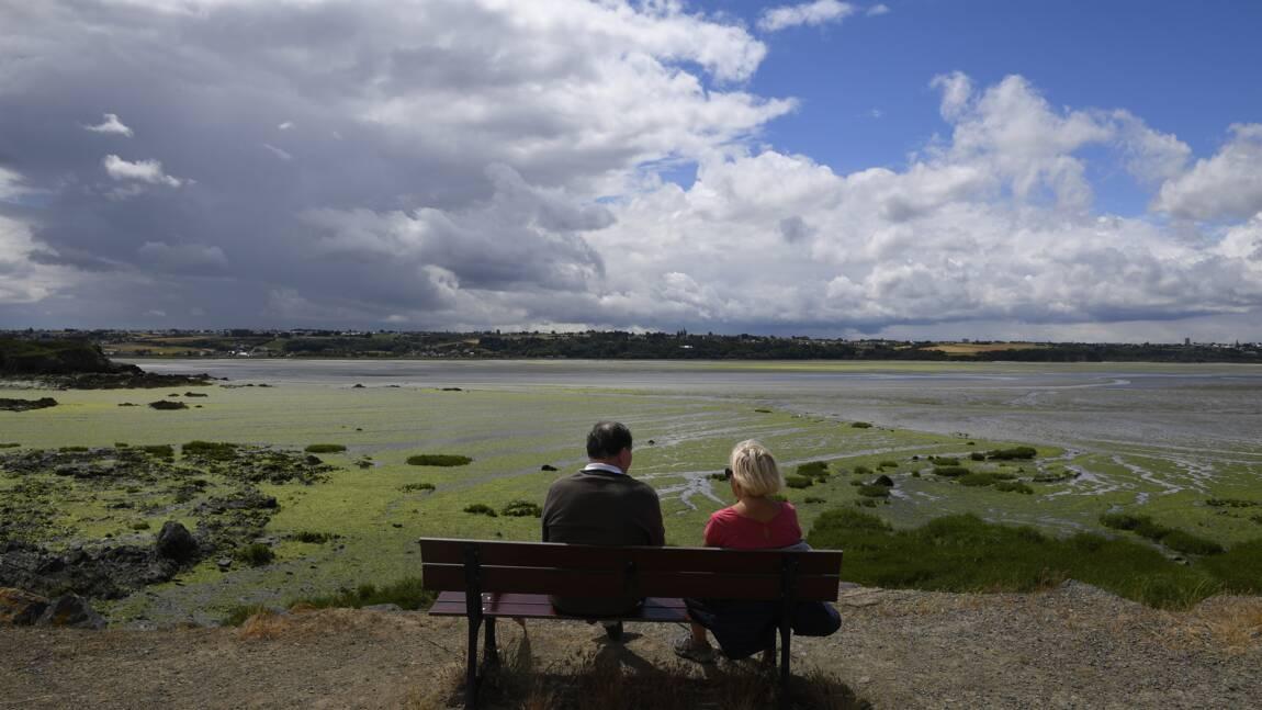 Algues vertes: un second plan de lutte lancé pour 2017-2021