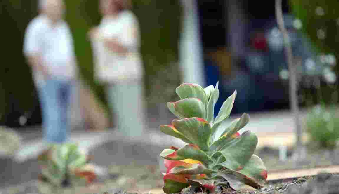 Des plantes rares prisées en Asie arrachées des côtes californiennes