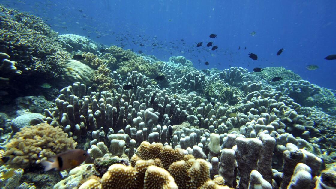 Une des grandes explosions de la vie marine non liée aux météorites