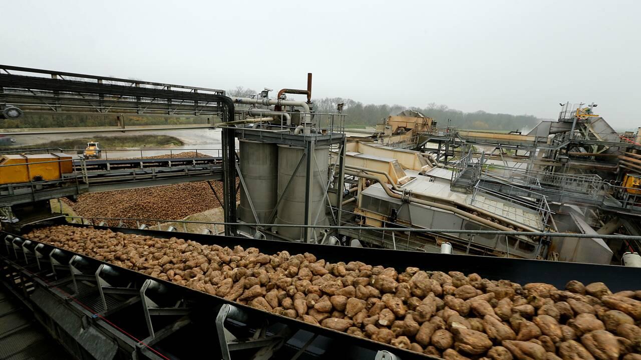 """Biocarburants: """"coup de poignard"""" de Bruxelles aux agriculteurs"""
