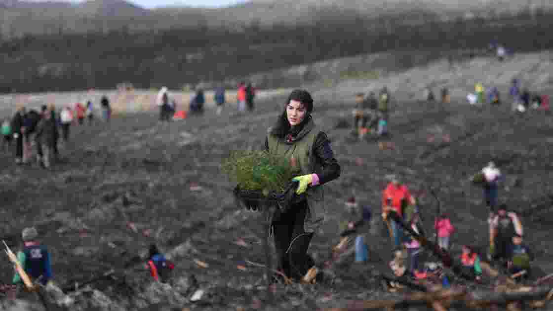 Après les incendies meurtriers, la plus vieille forêt du Portugal renaît de ses cendres