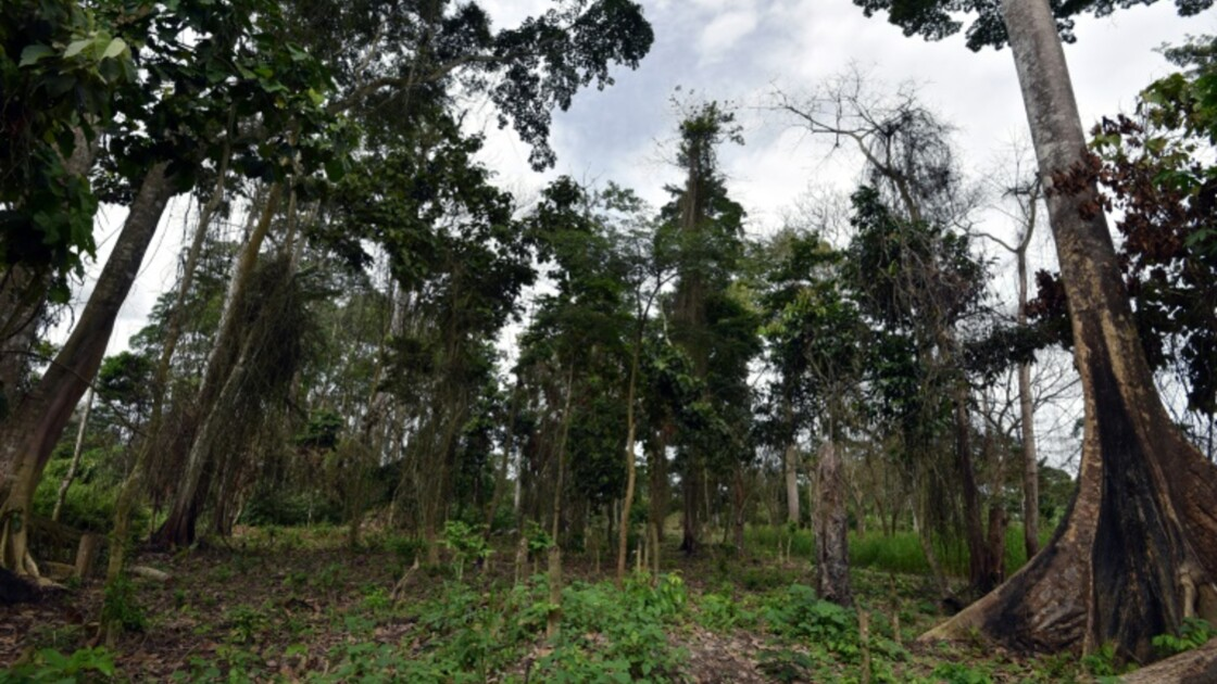 Côte d'Ivoire: la difficile équation environnement/populations au Mont Péko