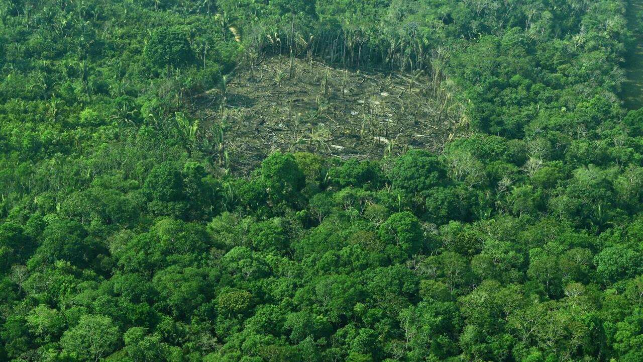 Brésil: recul de 16% de la déforestation en Amazonie