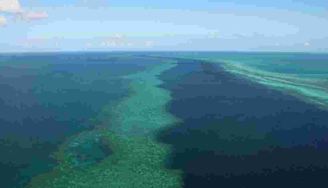 Le défi de l'Australie aux chercheurs: sauver la Grande Barrière de corail