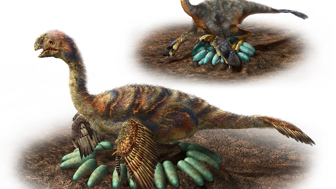 De lourds dinosaures savaient s'occuper de leurs oeufs sans faire d'omelette