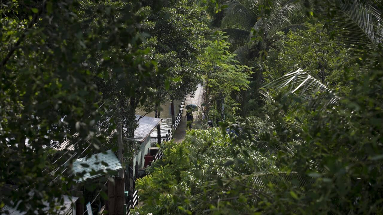 VIDÉO - À Bangkok, la bataille pour sauver une oasis de verdure