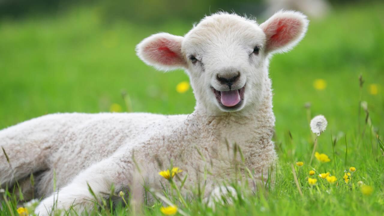 """Hulot veut créer """"un groupe de réflexion sur le bien-être animal"""""""