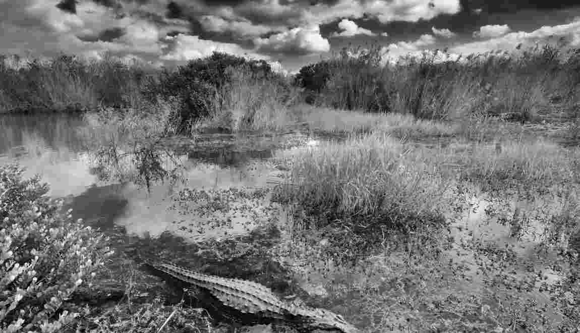 Floride : dans le dédale des Everglades