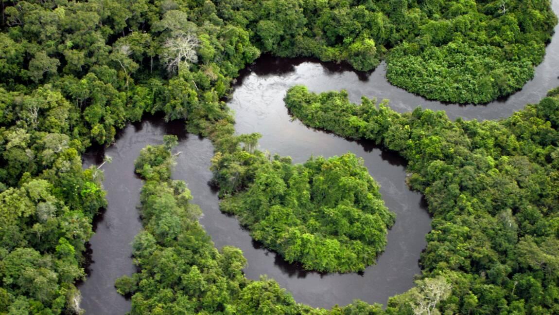 Au Brésil, victoire pour les défenseurs de la forêt amazonienne