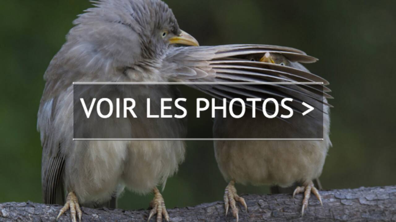 Dix photos d'animaux rigolos
