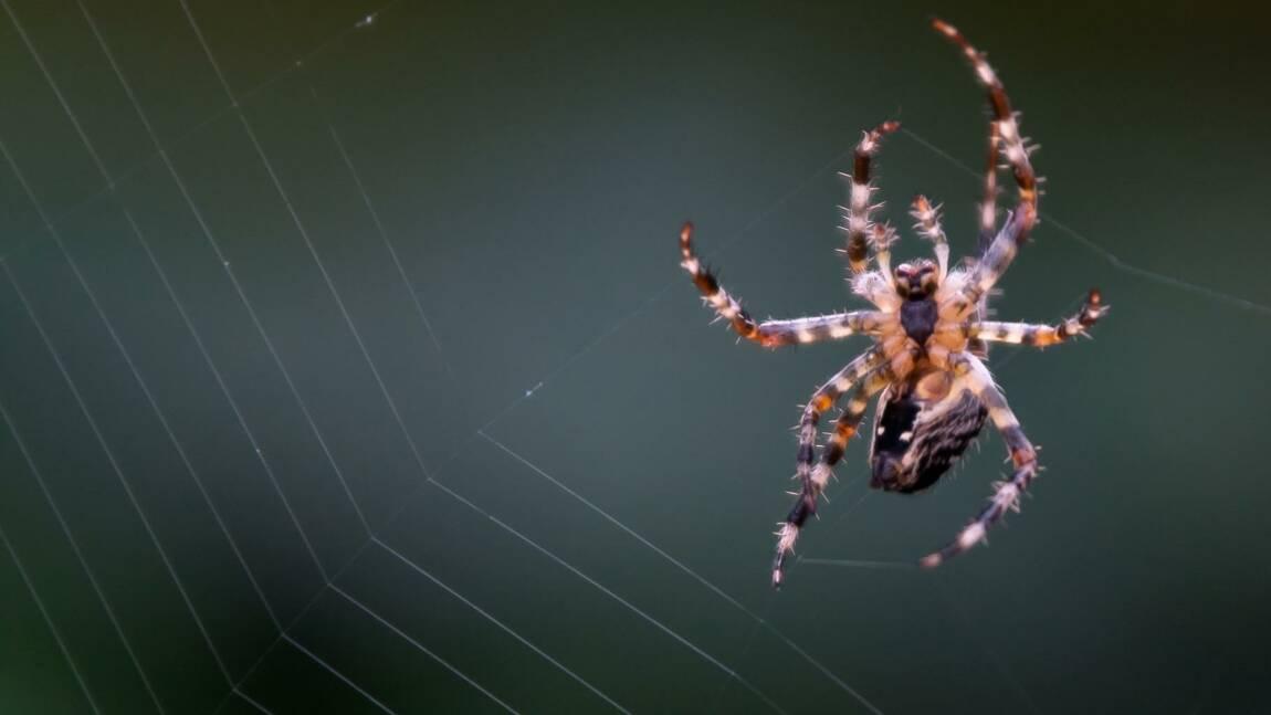 Cinq choses que vous ne saviez (peut-être) pas sur les araignées