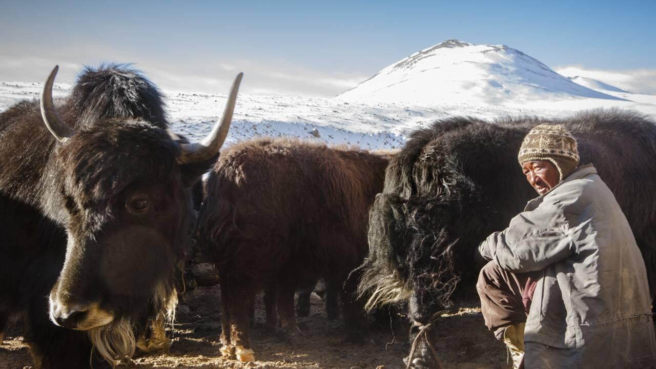 VIDÉO - L'âme du Ladakh