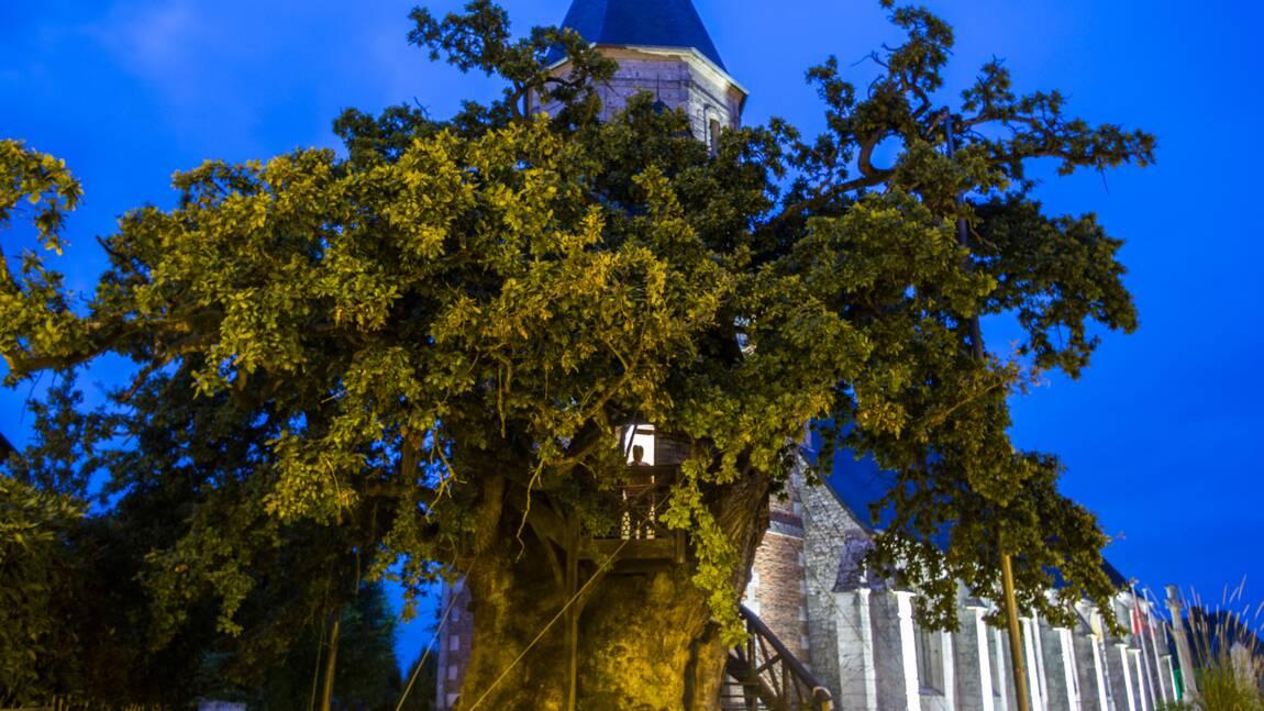 A Allouville, le vieux chêne est éternel