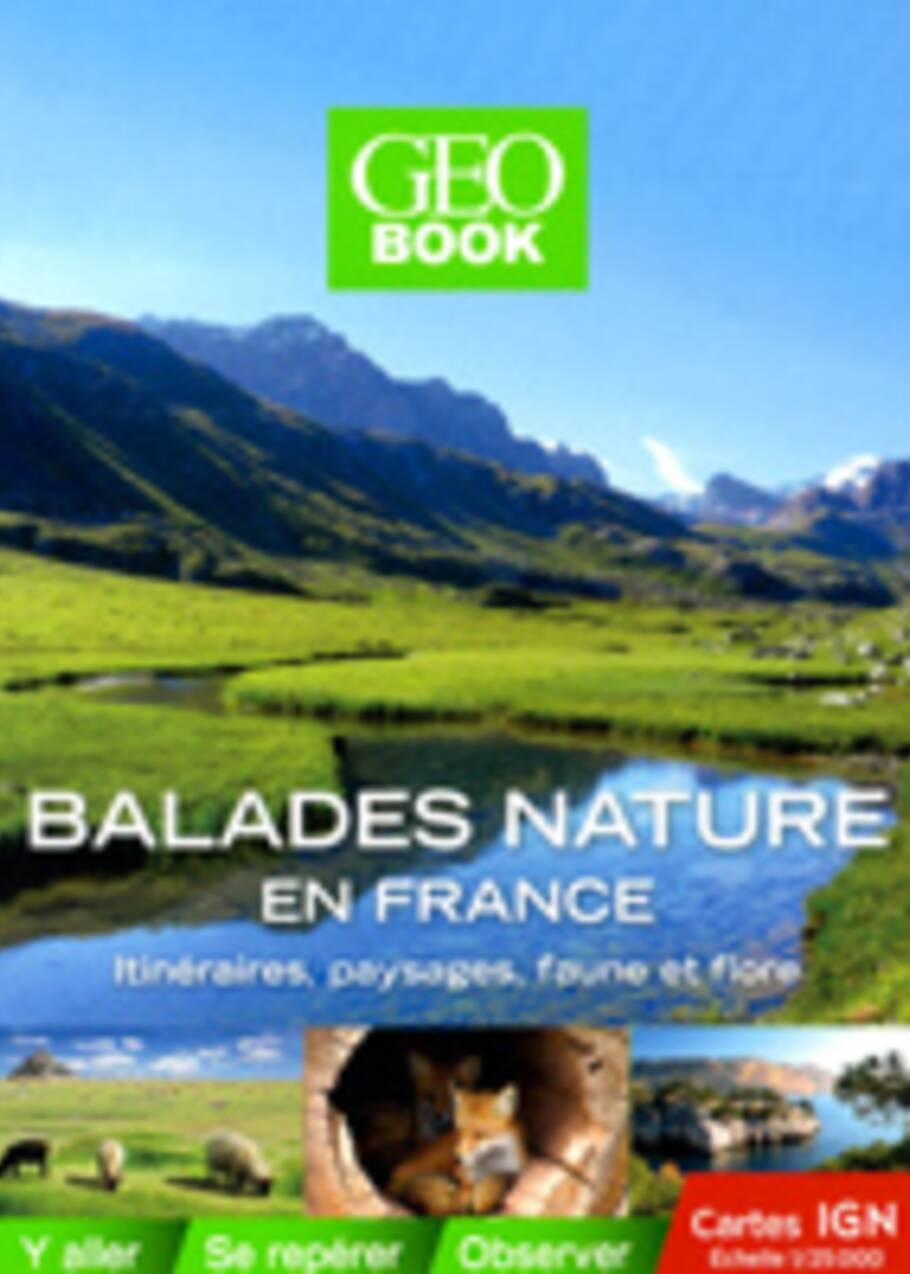 Au Pays basque, randonnée dans la forêt d'Iraty