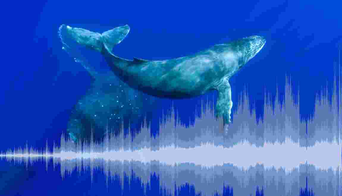 Biophonie : écoutez la grande symphonie du vivant