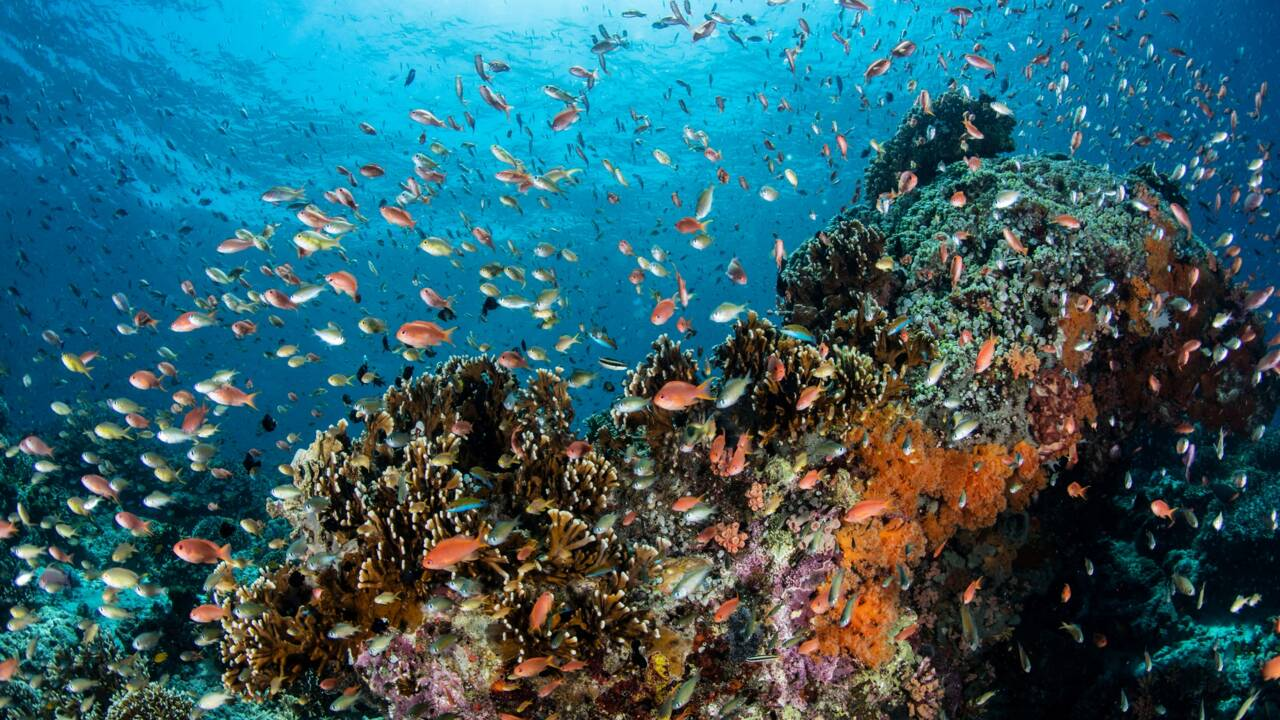 Biocénose, la cohabitation des espèces à l'état naturel