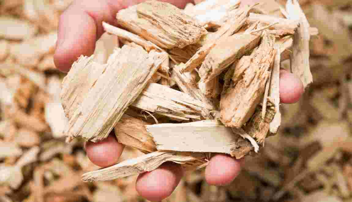 Biomasse : une source d'énergie propre et précieuse