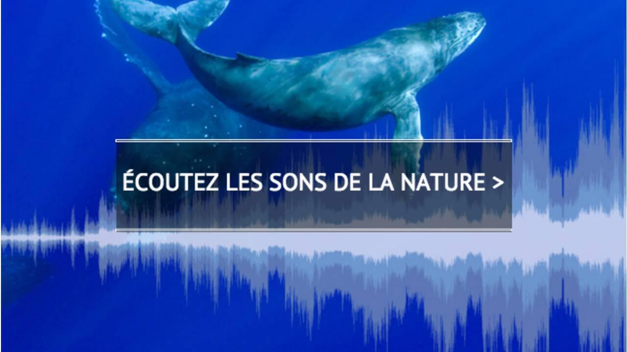 VIDÉO - La nature sur écoute : Bernie Krause, chasseur de paysages sonores