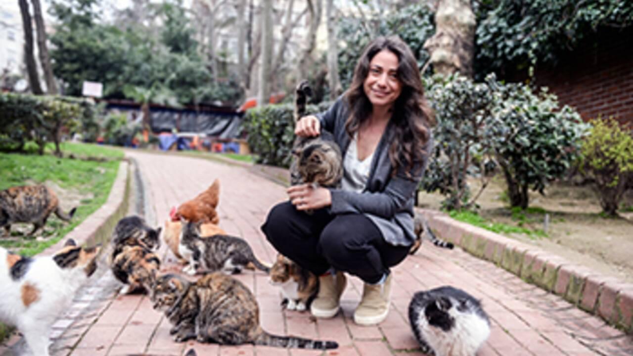 CINÉMA - Les chats d'Istanbul à l'affiche de Kedi
