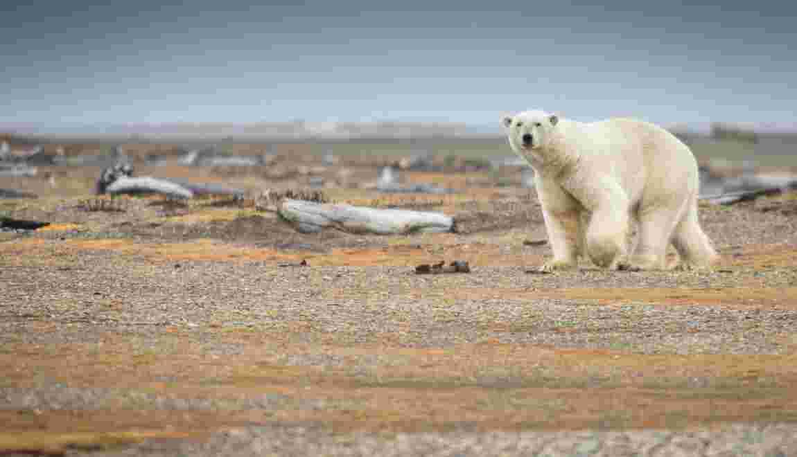 Changement climatique : la planète et ses habitants en danger