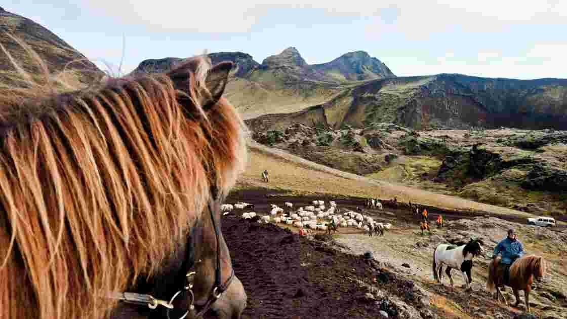 Islande : le réttir, spectaculaire transhumance d'automne