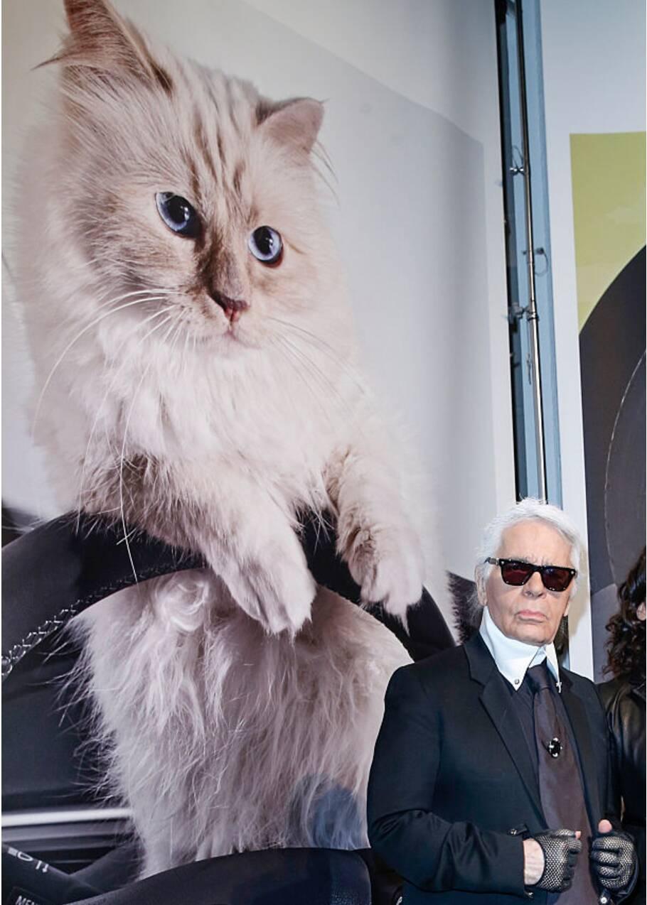 Ces chats stars du web